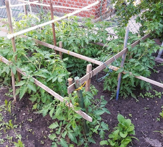 A photo of my Nonno's garden, where the arugula from our salad came from.