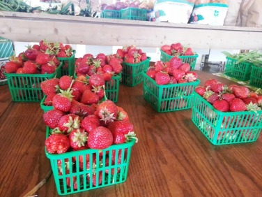 Freshly picked strawberries in Whitchurch-Stouffville.