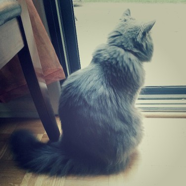 FiFi could spend an eternity watching the birds and squirrels outside.