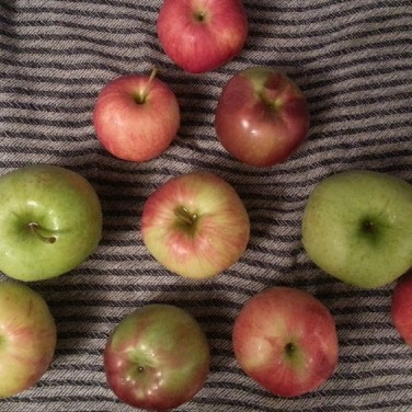 My aunt's brother-in-law knows someone who owns an apple farm. Every fall, we look forward to biting into several of these delicious fruits!