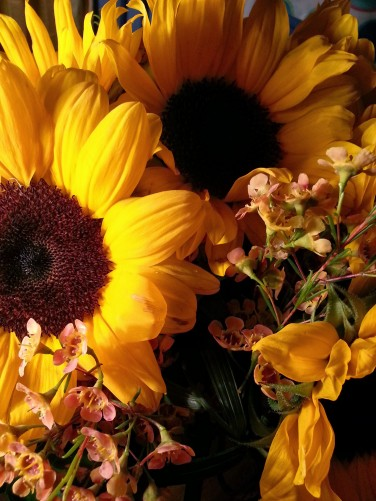 Sunflowers are my best friends! For real, though!