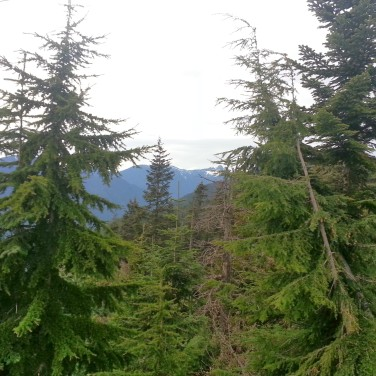 My partner and I climbed Grouse Mountain. I didn't know the Grouse Grind was also known as nature's stairmaster. Going up, I didn't think I would actually make it to the top. Once I did, though, I had this beautiful view (and a bench to sit on).