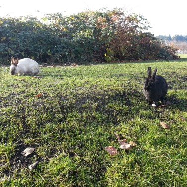 There are some great paths in Vancouver! So great that when you see bunnies like these ones, they let you get extremely close!