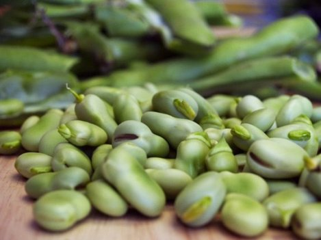 Fava beans are typically available from April until mid-July and are high in protein and fibre. Photo by: Creative Commons.