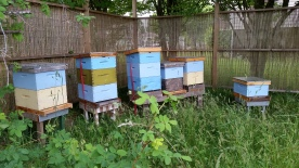 The hive! Photo courtesy of: EastVan Bees.