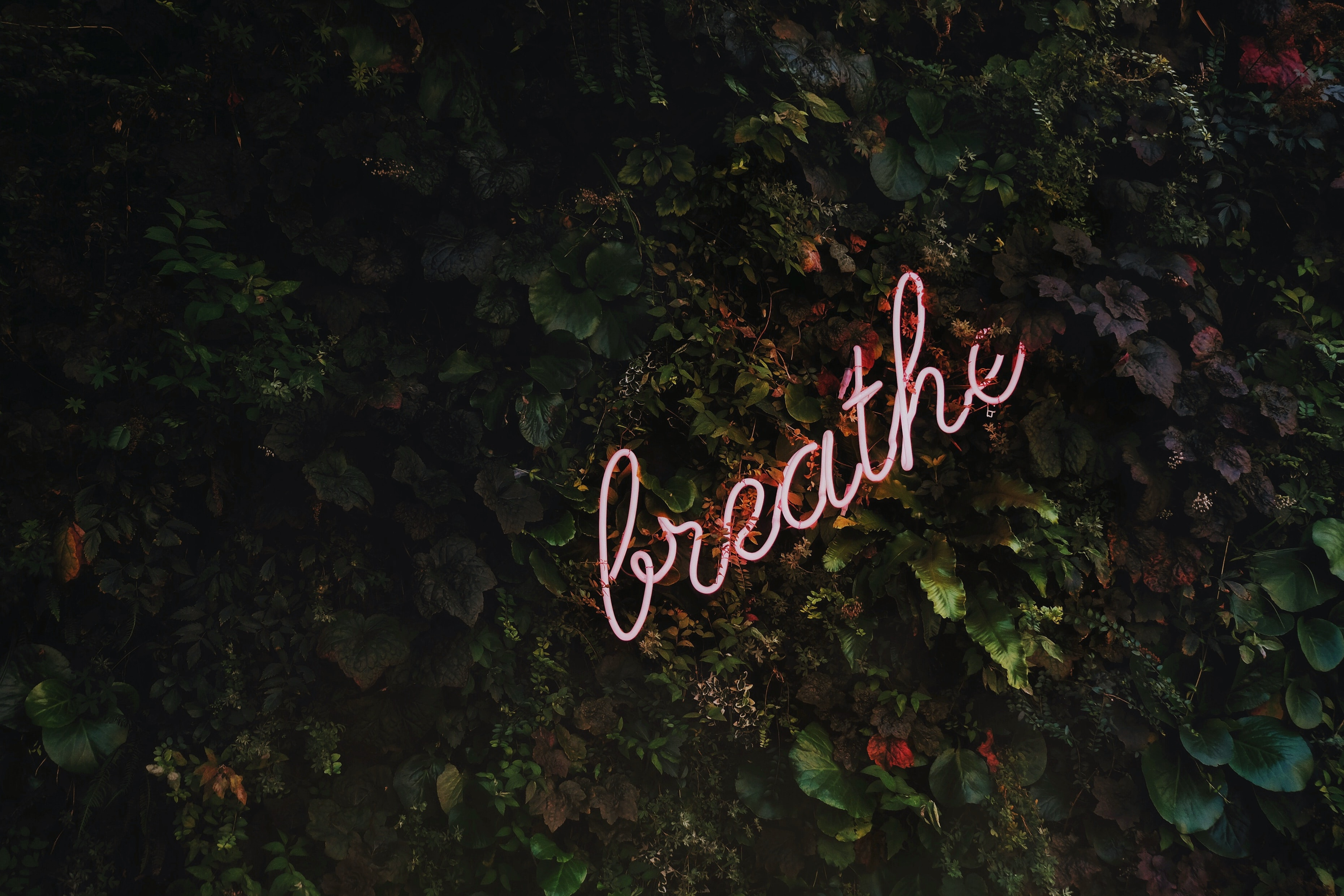 Neon sign on vines that says breathe