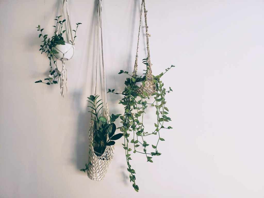 Three medium-sized plants are potted in beige, knitted hangers, delicately resting against a white wall.